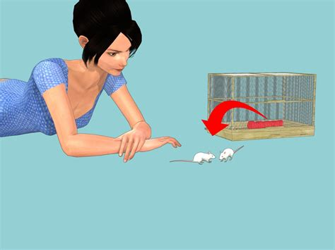 care  pet mice  steps  pictures