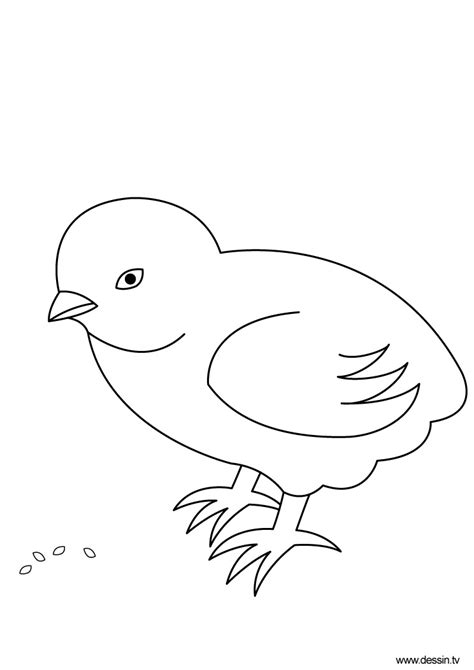 free coloring pages of chick cartoon