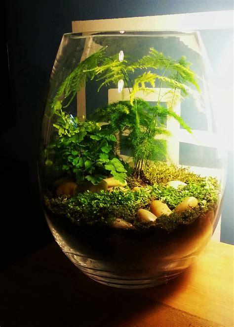 terrarium terrariums and miniature gardens pinterest