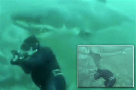 shark getting dragged behind a boat sharks news pictures and videos mirror online