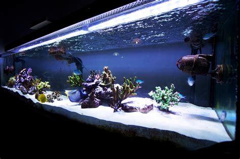 best led light for saltwater aquarium full tank shot photos with orphek pr 156 aquarium led