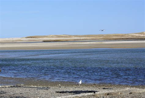 best beaches in cape cod for families cape cod beaches hyannis ma real estate
