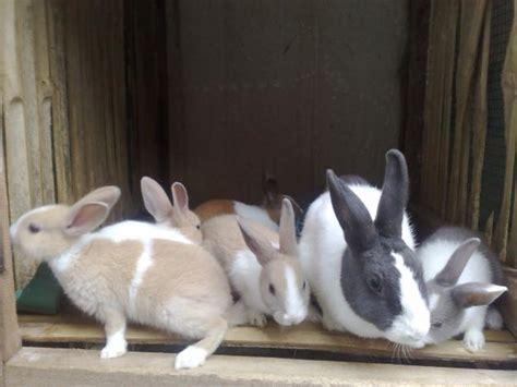 Harga Pakan Ternak Kelinci beternak kelinci dokter ternak