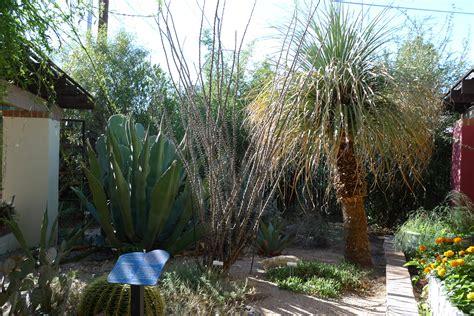 Desert Botanical Garden Tucson Desert Botanical Garden Tucson Day Trip To Tuscon Botanical Garden Sunset Tucson Botanical