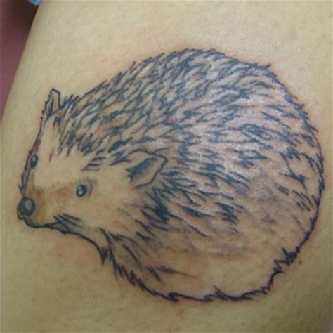 hedgehog tattoo meanings itattoodesigns com