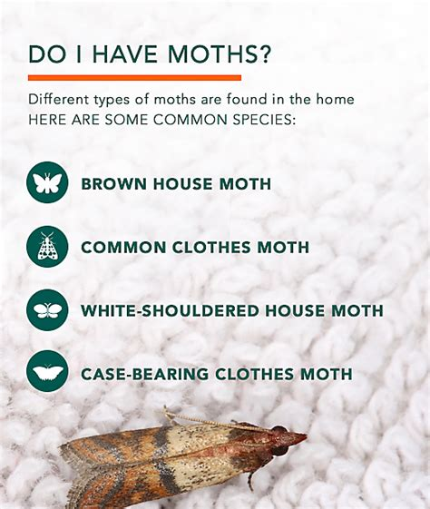 How Do You Get Rid Of Pantry Moths by Clothes Moths Facts How To Get Rid Of Moths