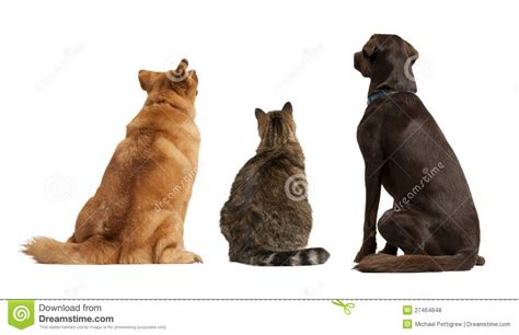 looking for free puppies cat and dogs looking up royalty free stock photos image 27464848