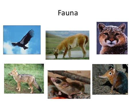 fauna de la zona sur chile en imagenes zona austral