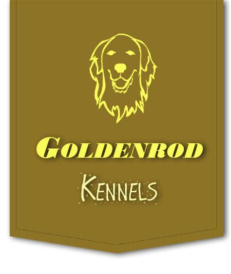 golden retriever breeders in western pa goldenrod kennels western pa s premier golden retriever breeder