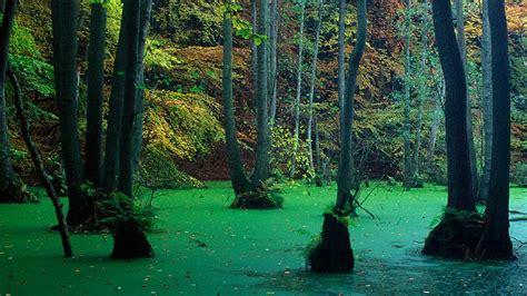 nienhagen wood in mecklenburg vorpommern germany nienhagen wood germany pixmatch search with picture