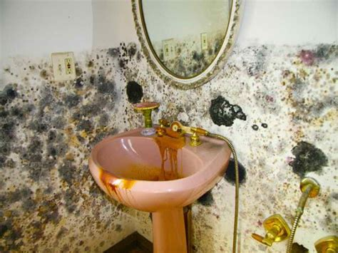 moldy bathroom bathroom how to prevent mold in bathroom black mold test
