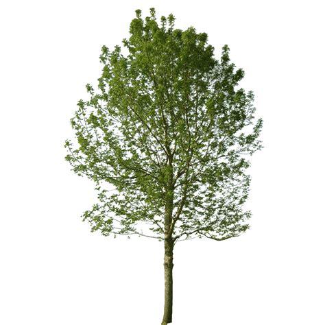 baum architektur cutout tree cutout baum visualisierung