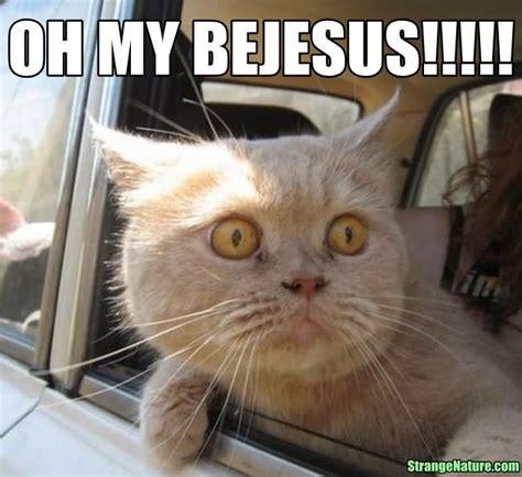 Omg Cat Meme - cat funny face meme www pixshark com images galleries