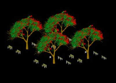 poinciana trees  dwg model  autocad designs cad