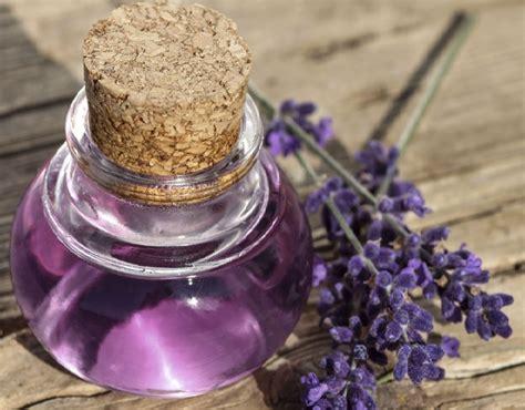 Minyak Bunga Lavender 25ml Murni 20 manfaat lavender untuk kesehatan dan kecantikan bibitbunga
