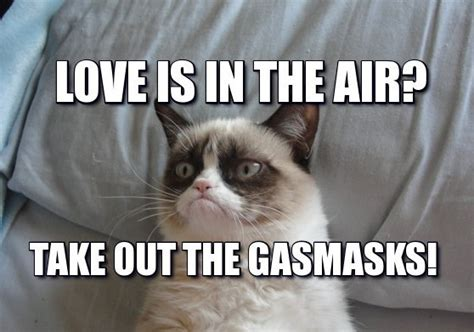 Grumpy Cat Love Meme - 32 funny angry cat memes for any occasion freemake