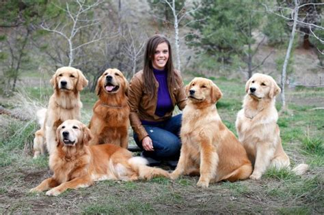 golden retriever bc nadina golden retrievers balanced temperament longevity structure