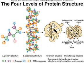 Polypeptide chains unravel and lose their specific shape and function