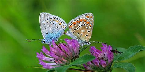 giardino farfalle un giardino pieno di farfalle curiosit 224 grechi giardini