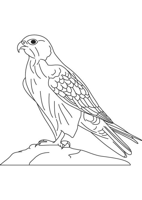 18 best hawk falcon coloring pages images on pinterest