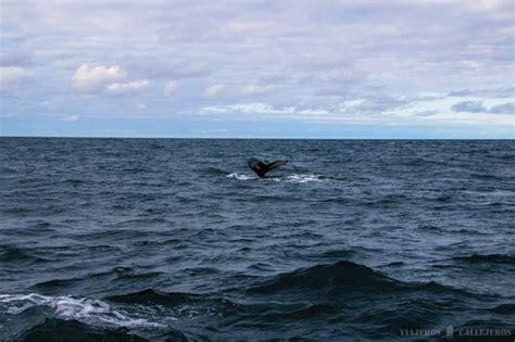 he visto ballenas 8415685513 avistamiento de ballenas en h 250 sav 237 k islandia viajeros callejeros