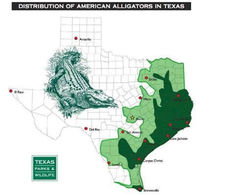 alligators in texas map texas cryptid alligator spotted in lasas river