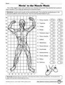 Muscular System Worksheet by Muscular System Worksheet Science The