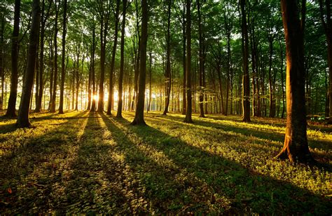 imagenes de bosques otoñales fondos de pantalla bosques 225 rboles rayos de luz hierba