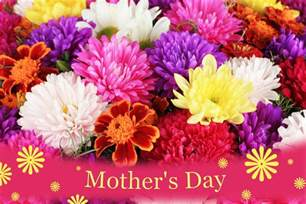 Flowers For Mother S Day by Mothers Day Flowers Galleryhip Com The Hippest Galleries