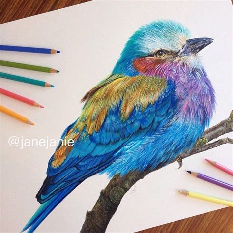 libro bird art drawing birds i finally completed the roller bird drawing acrylic paint faber castell and prismacolor