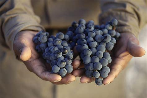 imagenes de uvas en bombas vendimia grand cru vinos nacionales e importados