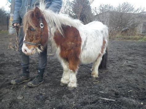 pferde suchen ein neues zuhause 2 kleine schecken suchen ein neues zuhause in kemberg