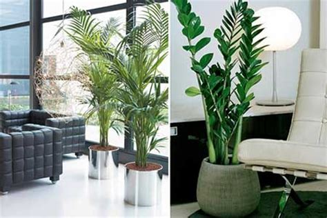 decorar a sala plantas 25 dicas de plantas artificiais para salas de estar e de