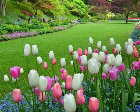 butchart gardens victoria  treasure  canadian gardening