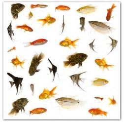 types of aquarium fish can i purchase live aquarium fish on the internet aquariumpros inc minnesota