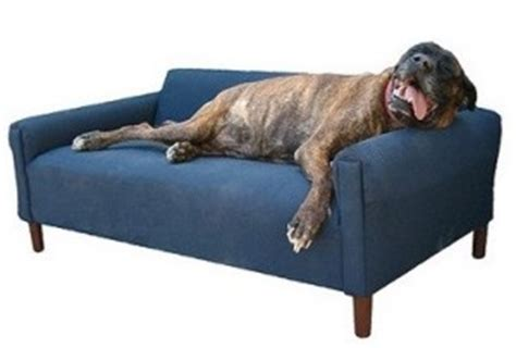 best couch for dog owners best sofas for dog owners hereo sofa