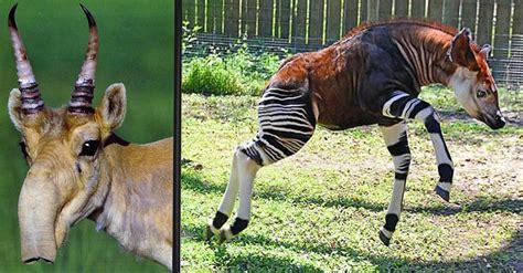 imagenes de animales extraños reales los 10 animales m 225 s raros del mundo 161 parecen provenir de