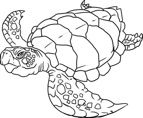 sea animals coloring pages free printable 579640