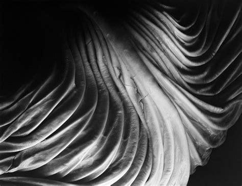 leaf pattern imogen cunningham 25 best ideas about edward weston on pinterest tina