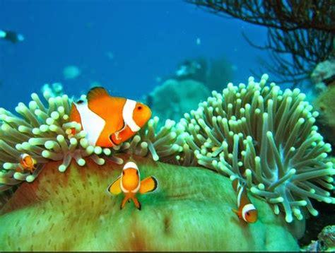 pemandangan alami bawah laut biru