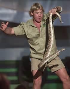 Steve Rattlesnake The Gallery For Gt Steve Irwin