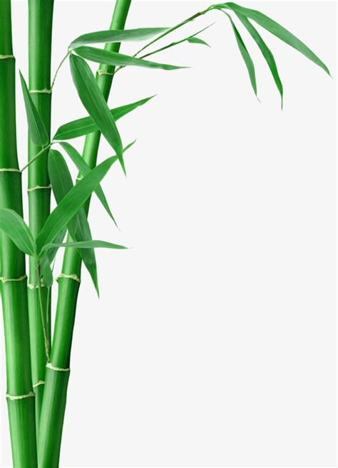 bamboo clip bamboo bamboo bamboo clipart bamboo bamboo leaves png