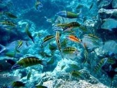 costruire vasca acquario acquario fai da te acquari