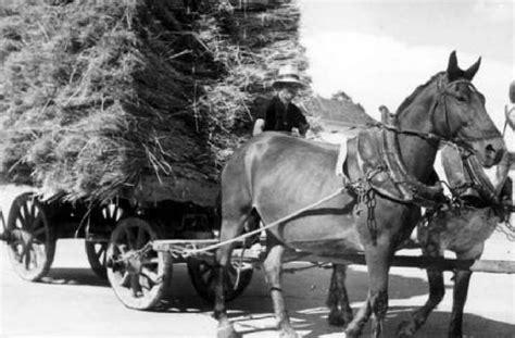 autotrasporti pavia trasporti di pavia e dintorni trasporti a trazione animale