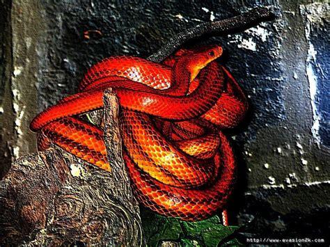 telecharger fonds decran serpent gratuitement