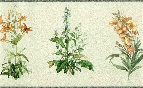 botanical wallpaper vintage botanical wallpaper wallpaperhdc com
