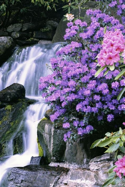 beautiful waterfalls with flowers waterfall and beautiful rhododendron nature s beauty pinterest gardens beautiful and nature