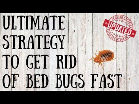 easy way to get rid of bed bugs 25 b 228 sta killing bed bugs id 233 erna p 229 pinterest