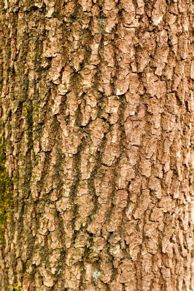 branch tree bark texture pattern pictures
