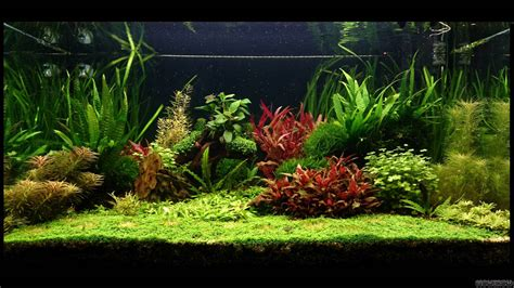 bacia do rio amazonas flowgrow aquascape aquarium database